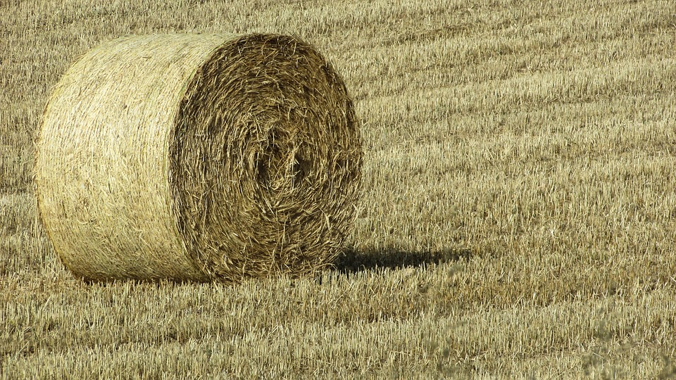 dry grass field background. Forage Dry Grass Countryside Agriculture Field Background