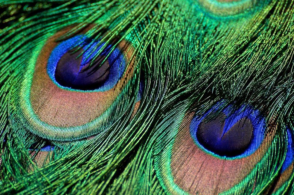 plume de paon iridescent vert photo gratuite sur pixabay. Black Bedroom Furniture Sets. Home Design Ideas