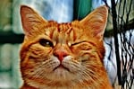 cat, wink, funny