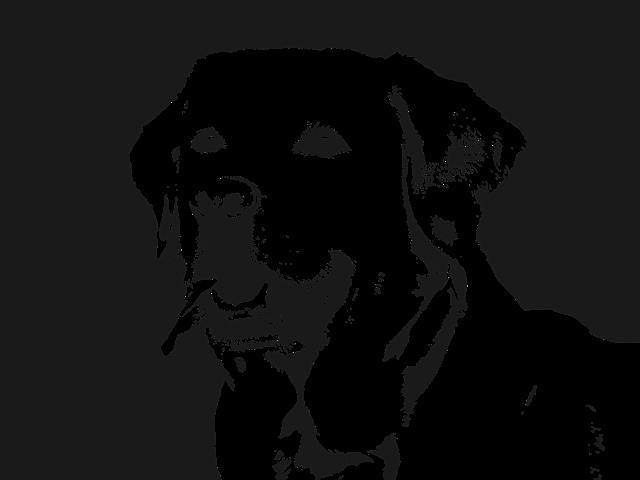 Labrador Dog Retriever 183 Free Vector Graphic On Pixabay
