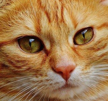 Gato, Face, Fechar, Vista, Olhos