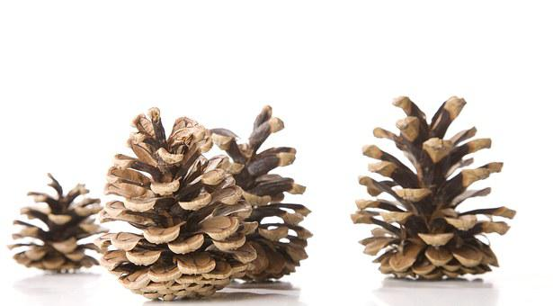 Tap, Fir Tree, Decoration, Pine Cones