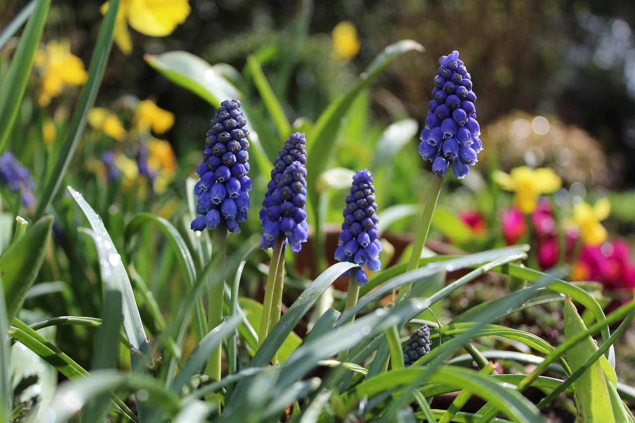 стремление ранние весенние садовые цветы фото каждый