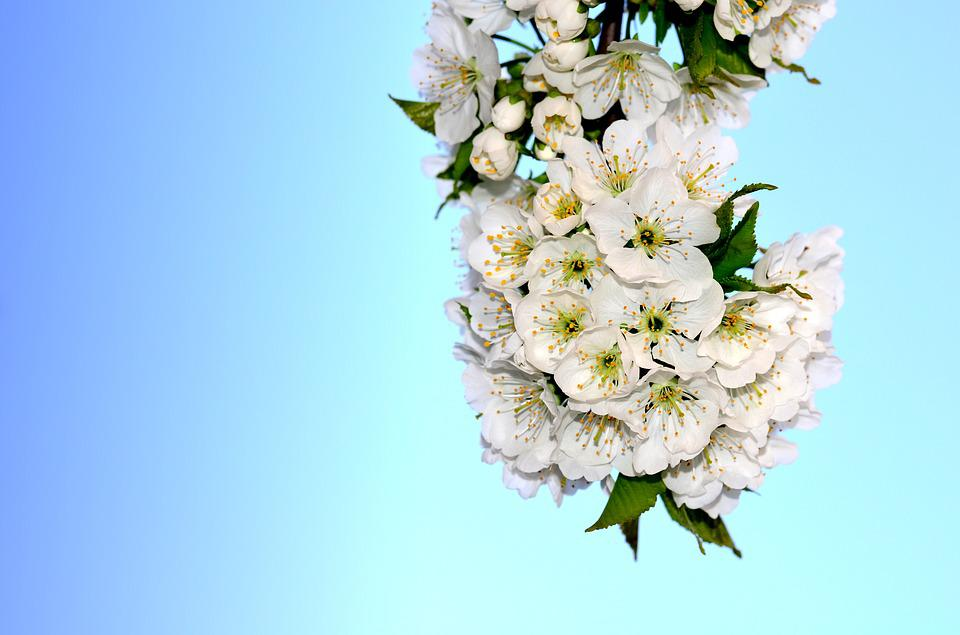 Image of spring flowers animaxwallpaper spring flowers free images on pixabay mightylinksfo