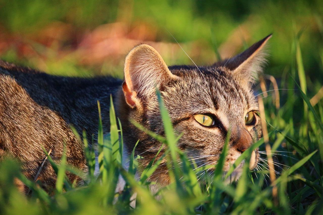 How do i catch a feral cat