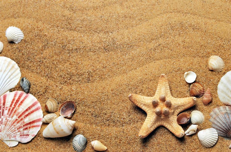 Seashells, Sand, Beach, Sea, Coast, Flat Lay
