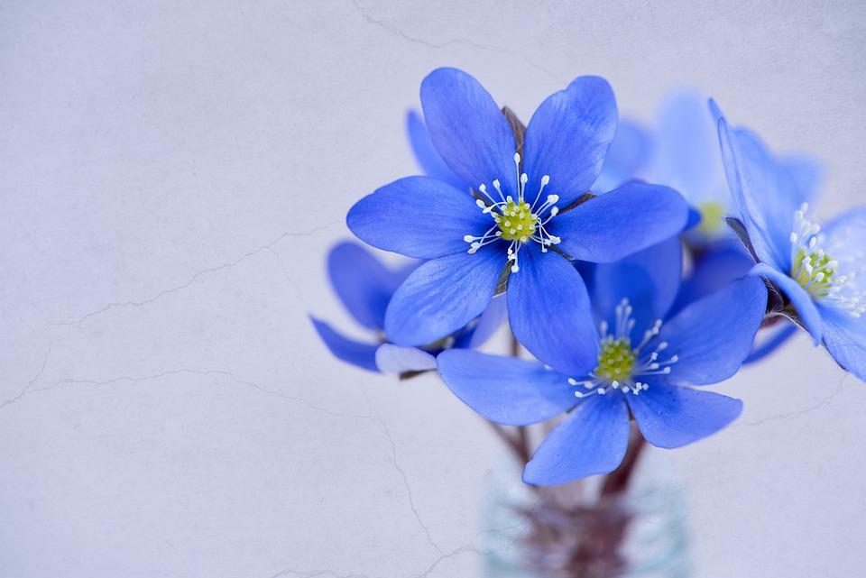 花の画像 p1_16