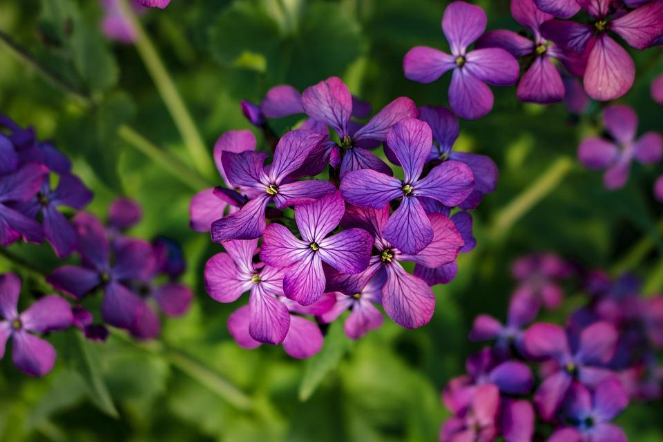 Flowers purple spring free photo on pixabay flowers purple spring purple flowers nature bloom mightylinksfo