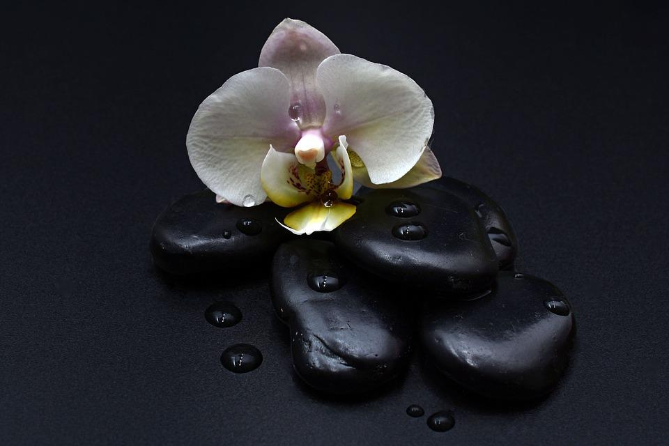 Stones Black Orchid Free Photo On Pixabay