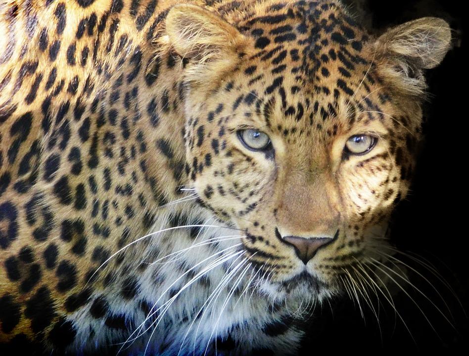 What Animal Is Big Da Cat