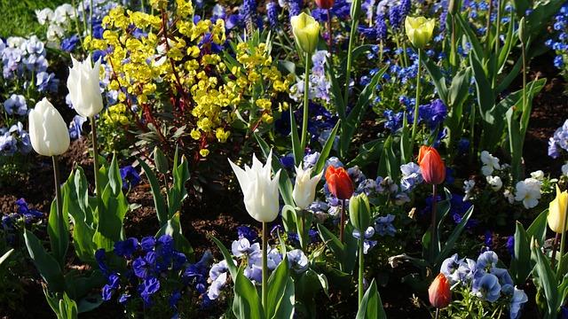 Gratis foto het voorjaar bloemen bloeien gratis for Semer le gazon au printemps