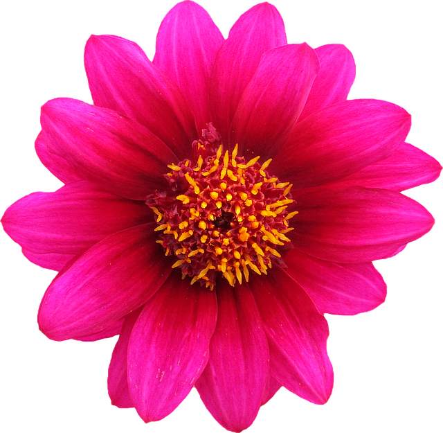 Png Clipping Flower · Free photo on Pixabay