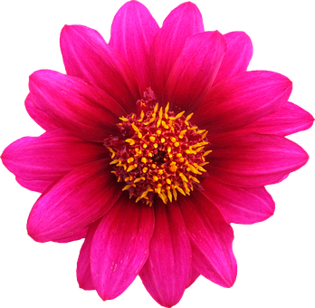 Flowers png images pixabay download free pictures png clipping flower graphics png png png p mightylinksfo