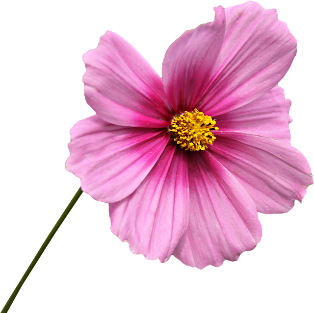 free photo png clipping flower graphics free image