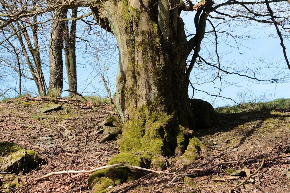 tree shrubs