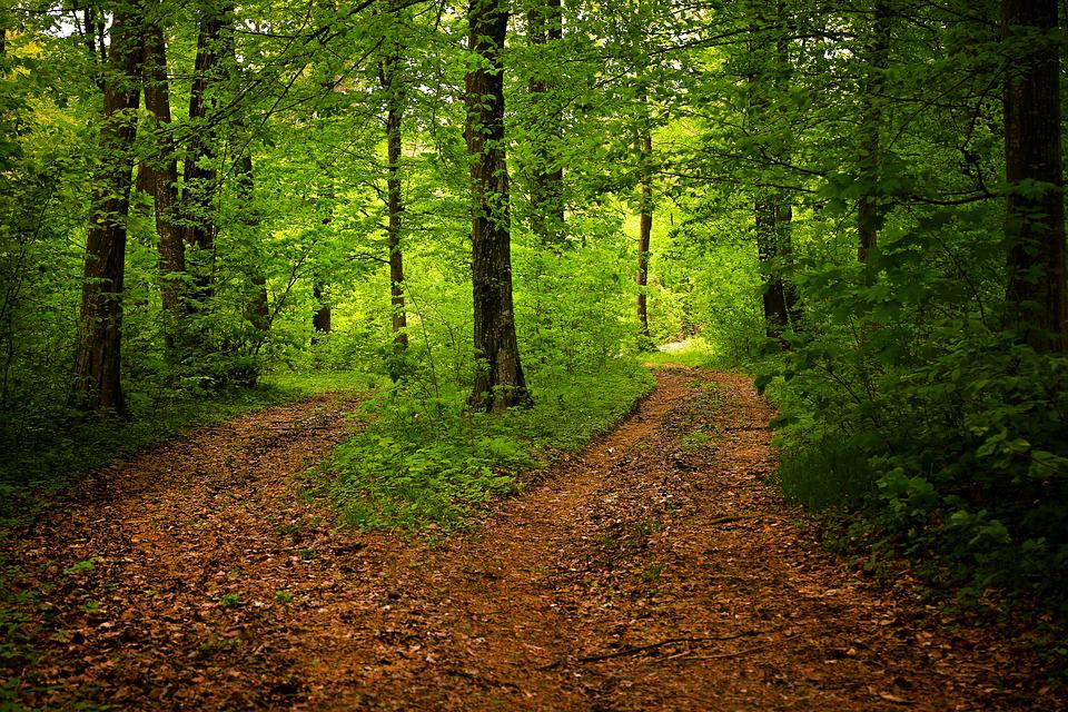 Path, Forest, Nature, Season, Green, Woods, Landscape