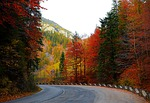 forest road, autumn, trees