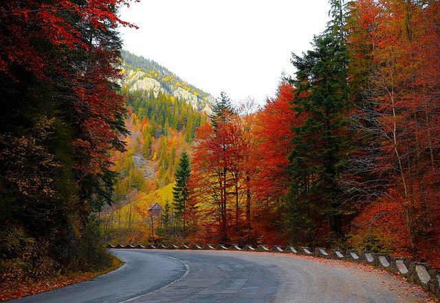 free photo forest road autumn trees road free image