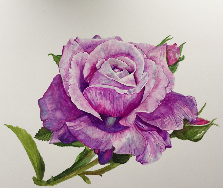 Free illustration painting rose blue moon free image for How to paint a rose watercolor