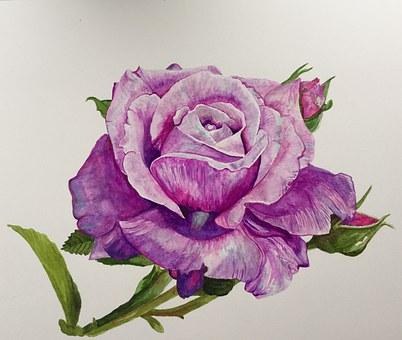 Painting Rose Blue Moon Watercolor El