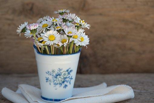 Daisy, Pointed Flower, Flower, White