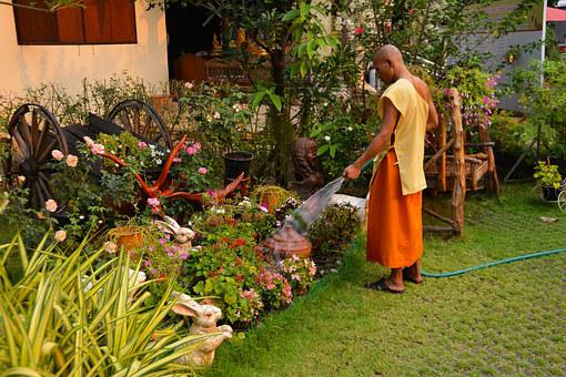 Monk, Gardening, Thailand, Garden