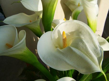 Flower Bouquet, White Calla Lily
