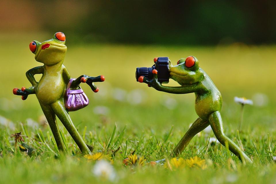 free photo frog photographer model   free image on