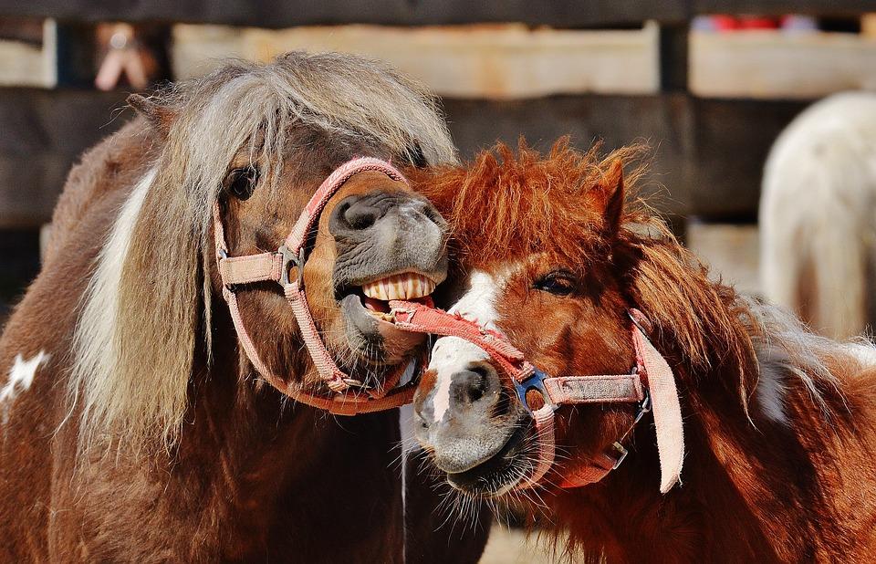 Pferde, Spielen, Lustig, Tier, Pferdchen, Natur