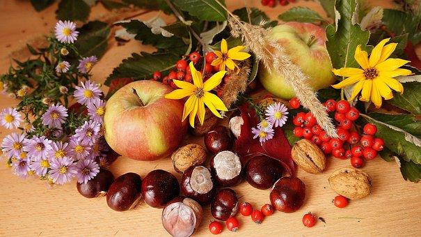 Natur, Pflanzen, Zusammensetzung, Obst