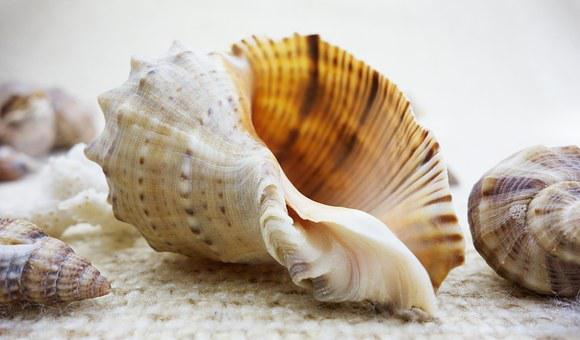 Shell, Shells, Nature, Beautiful, Beauty