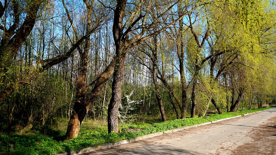 方式,路径,景观,植物,树,视图,公园,性质,春家装设计素材图片图片