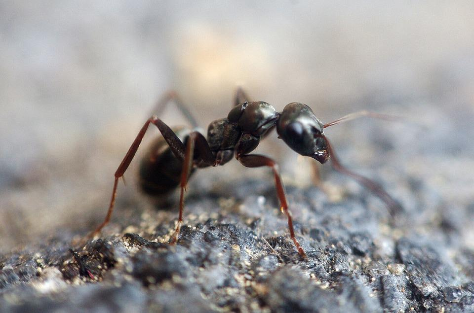 Ant, Insect, Macro, Animal, Anthill