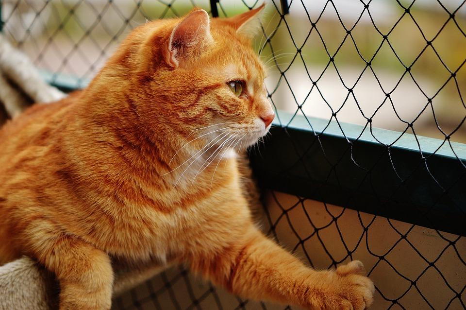 zrelé mačička pix