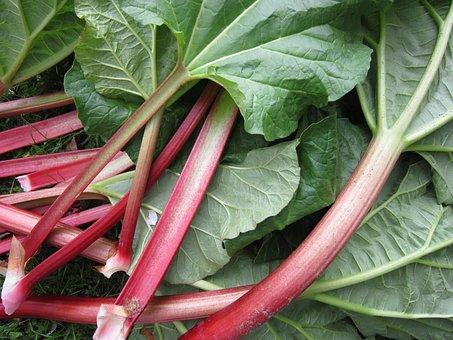 rhubarbe rouge de la ferme de l harpin