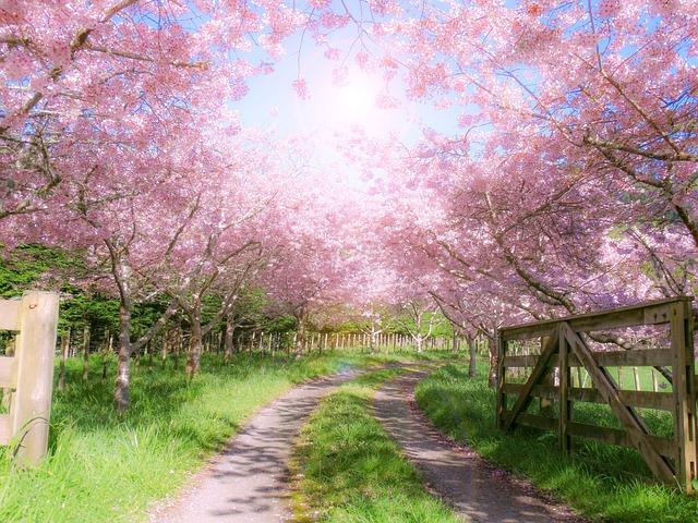 Farm Gate Wooden 183 Free Photo On Pixabay