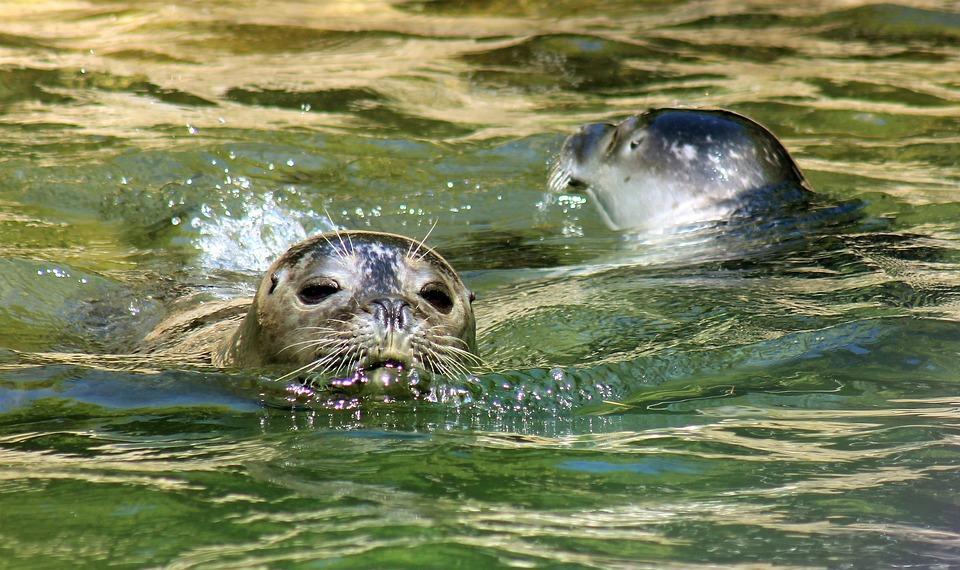830 Koleksi Gambar Ilustrasi Binatang Air Terbaik