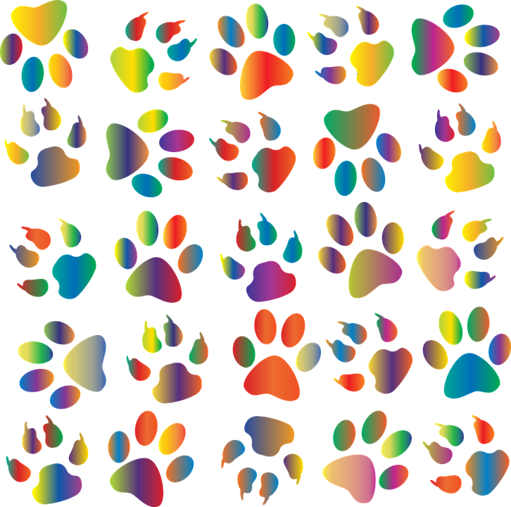 Colorful Prismatic Rainbow Free Vector Graphic On Pixabay