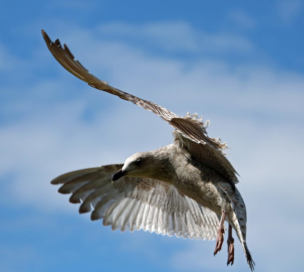 Птицы в полете картинки