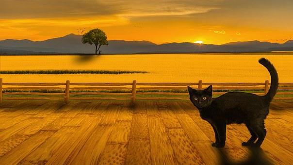 Kat, Landschap, Zonsondergang, Zon