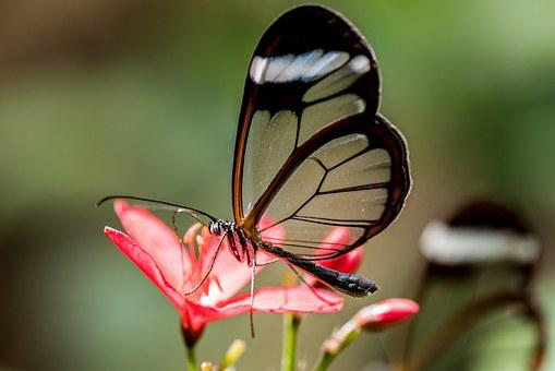 Butterfly, Macro, Pose, Plant, Green
