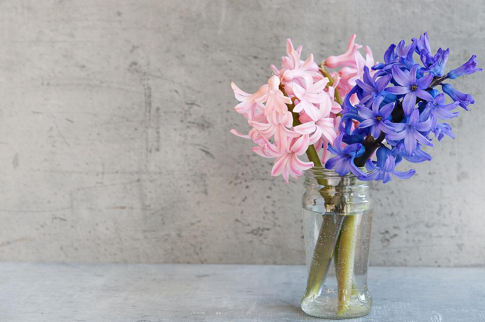 Hyacinth flowers pink free photo on pixabay hyacinth flowers pink blue vase glass deco mightylinksfo