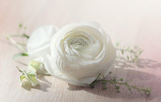 Fleur Blanche Images Pixabay Telechargez Des Images Gratuites