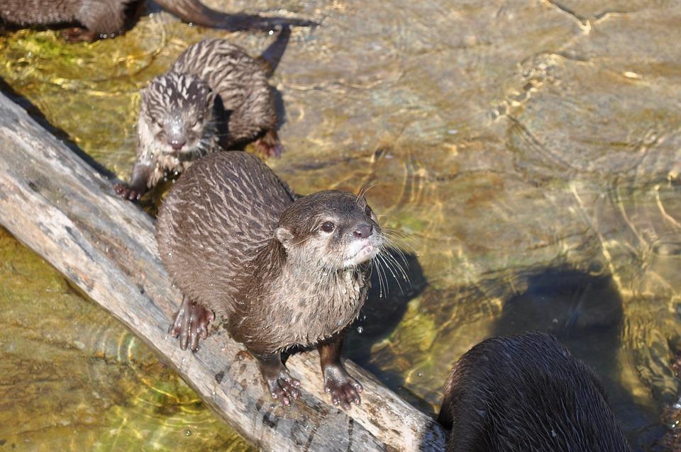 Zoo, Beaver, Kbh