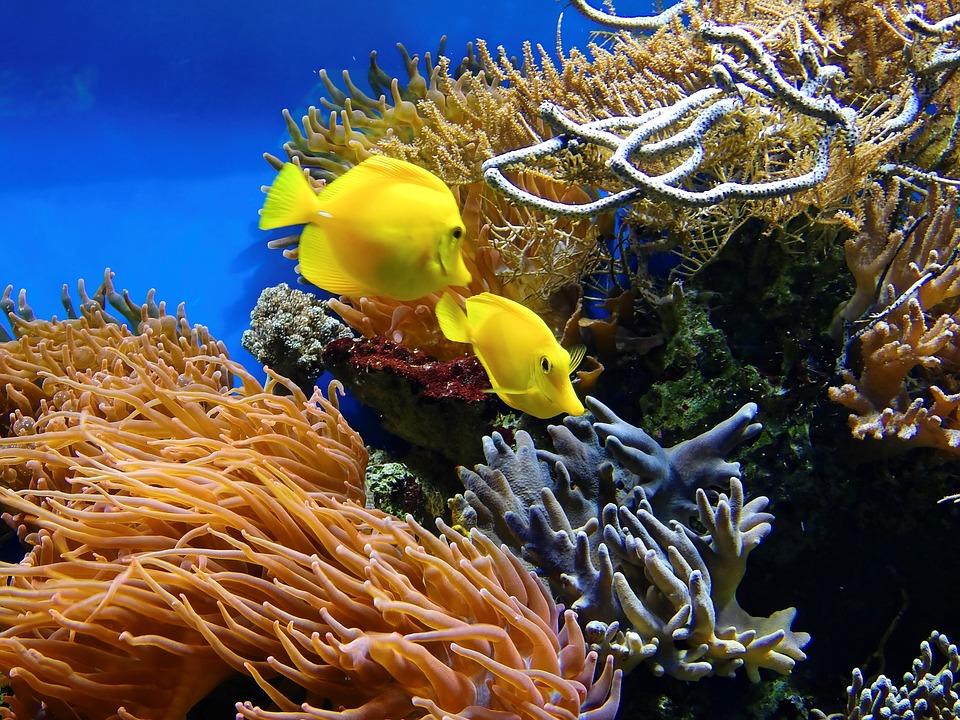 Coral, Fish, Underwater, Aquarium, Water