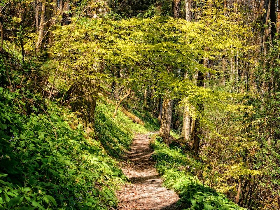 hiking nature wallpaper - photo #35