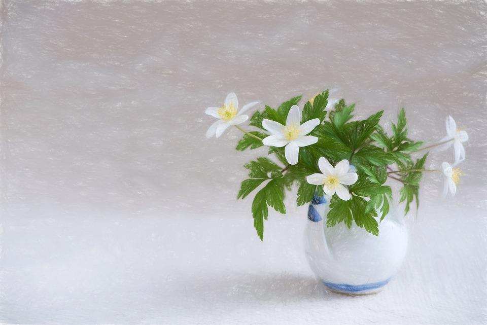 Drawing Flower Vase Free Photo On Pixabay
