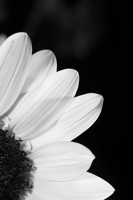 Flower Black And White Profile 183 Free Photo On Pixabay