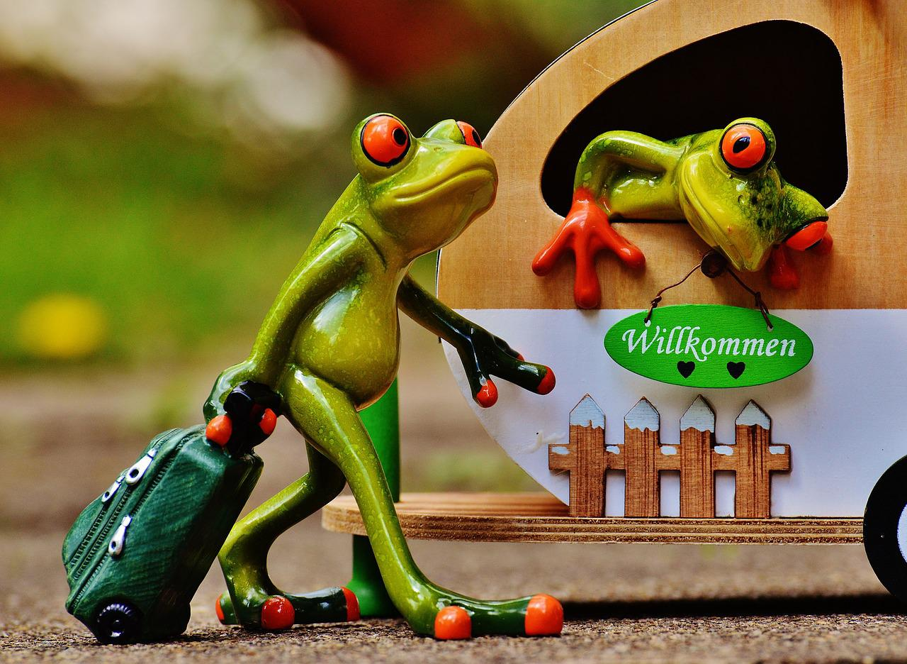 Лягушка путешественница картинки смешные