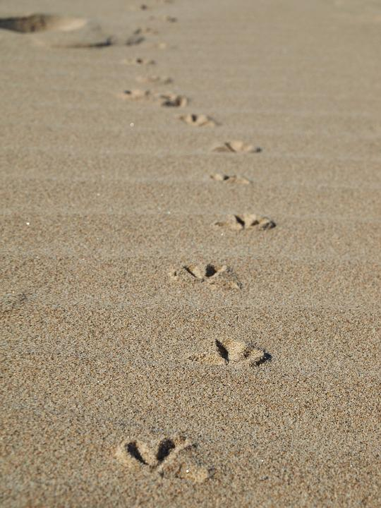 Image result for seagull footprints